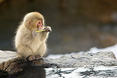 PRM 02 KH0012 01