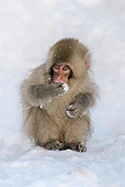 PRM 02 KH0013 01