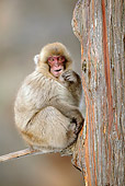 PRM 02 KH0018 01
