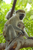 PRM 02 NE0001 01