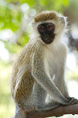 PRM 02 NE0002 01