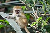 PRM 02 NE0003 01