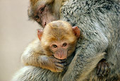 PRM 02 RK0006 08