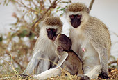 PRM 02 TL0003 01