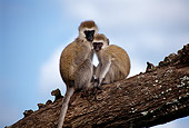 PRM 02 TL0004 01