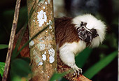 PRM 02 TL0006 01