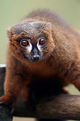 PRM 03 AC0027 01