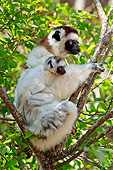 PRM 03 AC0035 01