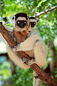 PRM 03 AC0036 01