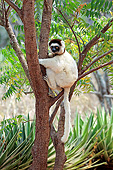 PRM 03 AC0037 01
