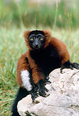 PRM 03 GL0001 01