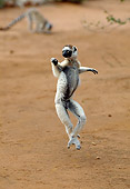 PRM 03 GL0003 01