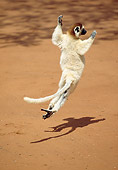 PRM 03 GL0004 01