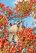 PRM 03 GL0005 01