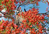 PRM 03 GL0007 01