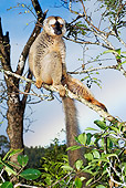 PRM 03 MH0002 01