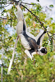 PRM 03 MH0009 01