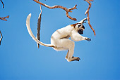 PRM 03 MH0010 01