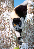 PRM 03 MH0014 01