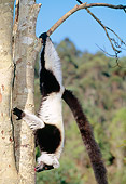 PRM 03 MH0015 01