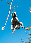 PRM 03 MH0016 01