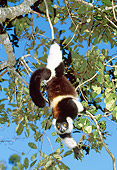 PRM 03 MH0017 01