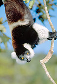 PRM 03 MH0018 01