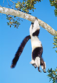 PRM 03 MH0019 01