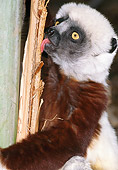 PRM 03 MH0024 01