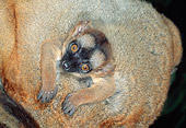 PRM 03 MH0031 01
