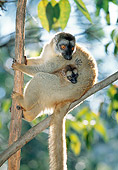PRM 03 MH0032 01