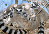 PRM 03 MH0040 01
