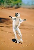 PRM 03 MH0051 01
