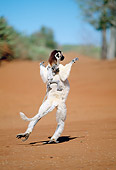 PRM 03 MH0056 01