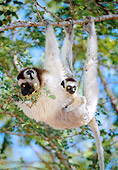 PRM 03 MH0062 01