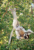 PRM 03 MH0063 01
