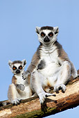 PRM 03 WF0001 01