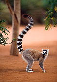 PRM 03 NE0002 01