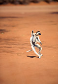 PRM 03 NE0007 01