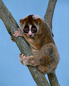 PRM 03 RK0003 02