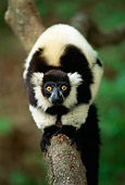 PRM 03 TL0001 01
