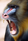 PRM 04 GR0001 01