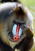 PRM 04 MH0003 01