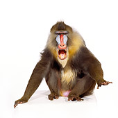 PRM 04 RK0016 06