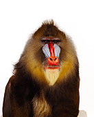 PRM 04 RK0010 02