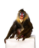 PRM 04 RK0017 01