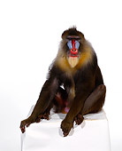 PRM 04 RK0019 04