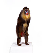 PRM 04 RK0022 02