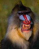 PRM 04 RK0028 02