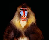 PRM 04 RK0029 03